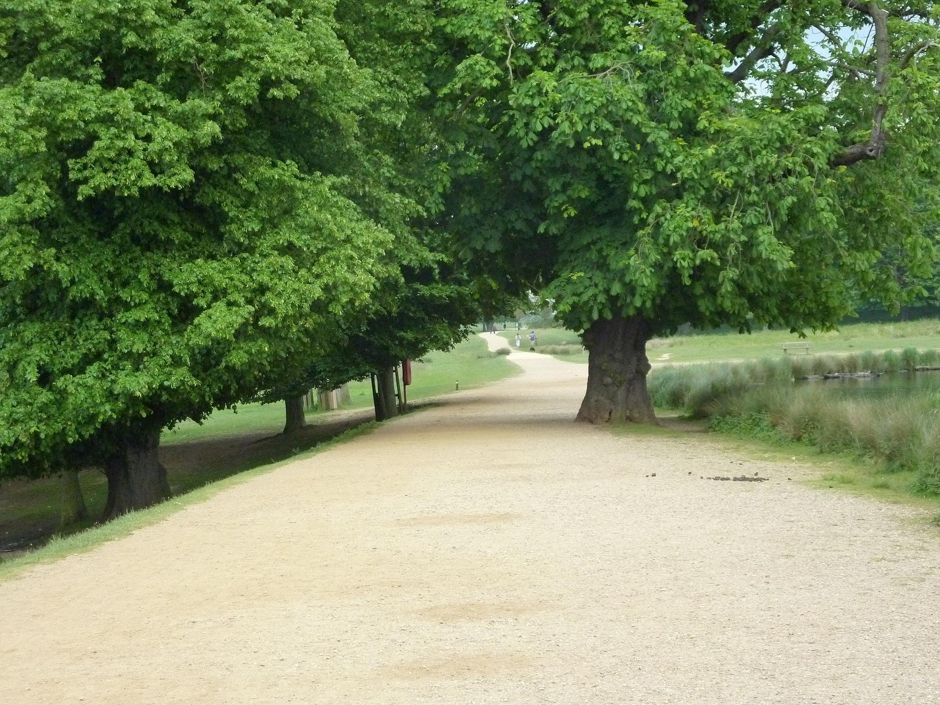 richmond-park-661652_1920